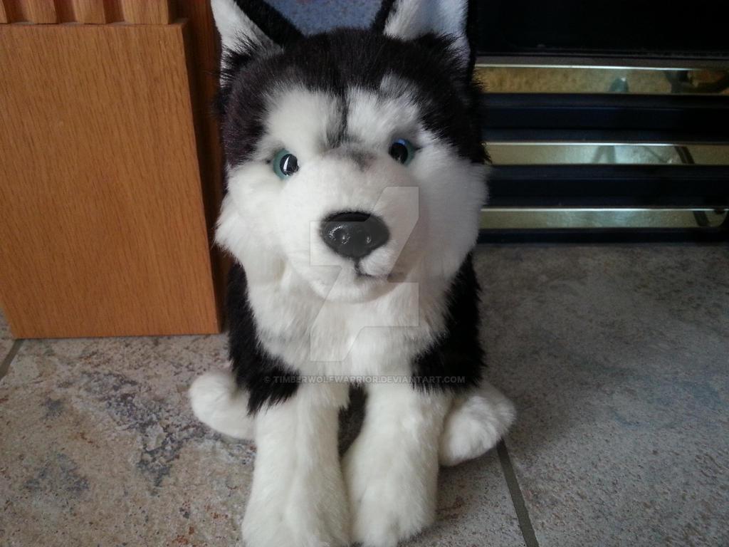 Webkinz Signature Siberian Husky by TimberWolfWarrior on