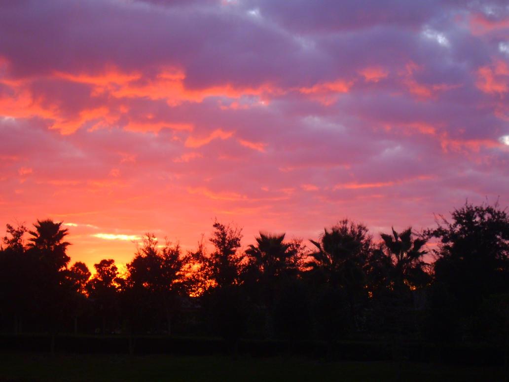 Image result for pink sunrise