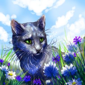 .cornflower blue field and white sky above. by Ali-zarina