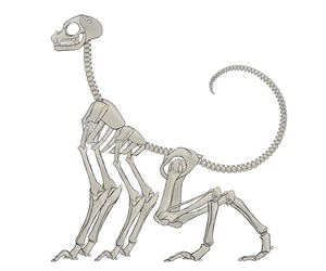 WorldBuilding: Beast 1 Skeleton by DoughTea
