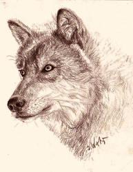 Wolf Drawing Zeichnung by DelicatArt