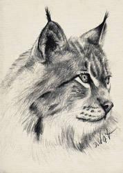 Luchs Zeichnung Lux Drawing by DelicatArt