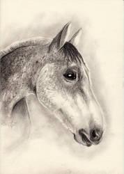 Fleabitten Grey Horse Drawing by DelicatArt