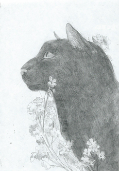 black cat and white flowers