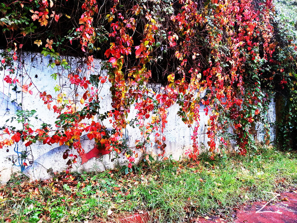 colors of the fall 2014 - 2 by ZzZzZzZzZzZz