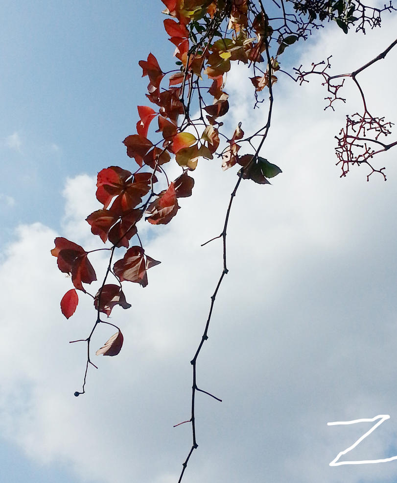 colors of fall 2014-3 by ZzZzZzZzZzZz