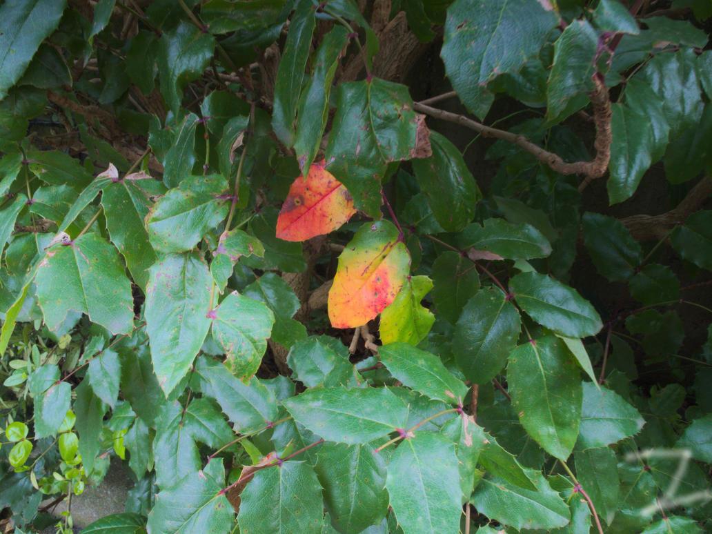 Colors Of Fall 2015-1 by ZzZzZzZzZzZz