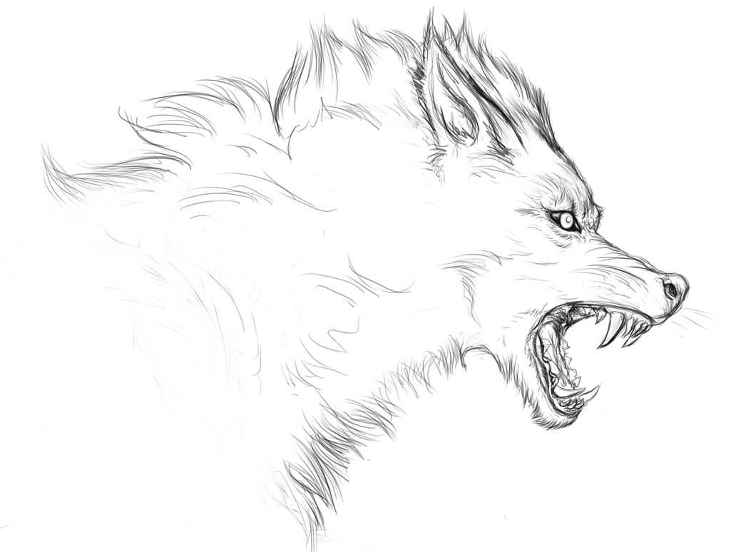 drawings of wolves