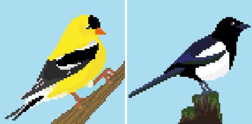 Canadian avian wildlife 01