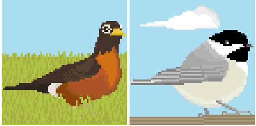 Canadian avian wildlife 02