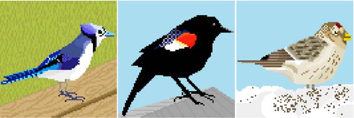 Canadian avian wildlife 03