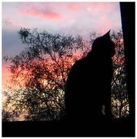 The Watcher by XxBrokenxXxArtxX
