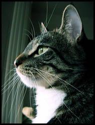 Portrait of a Cat - M.J. by XxBrokenxXxArtxX
