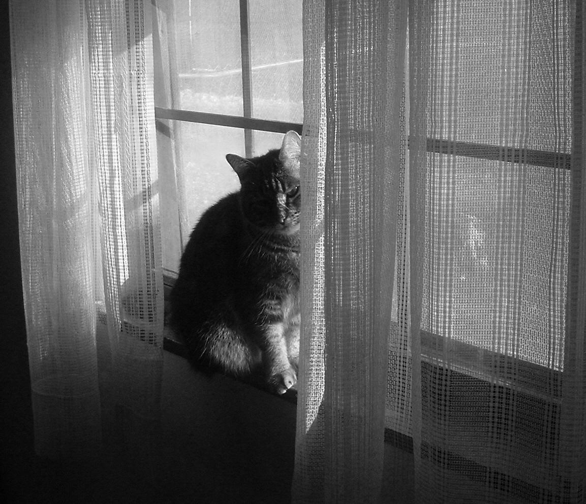 Cat by sSTARRMa