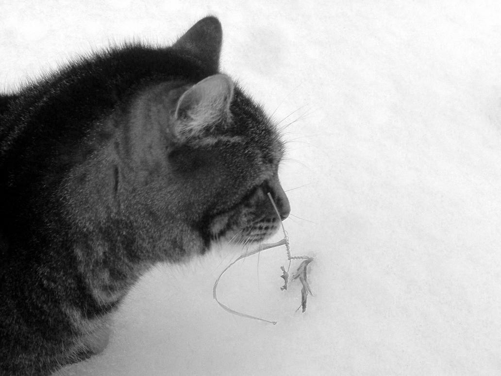 Cat3 by sSTARRMa