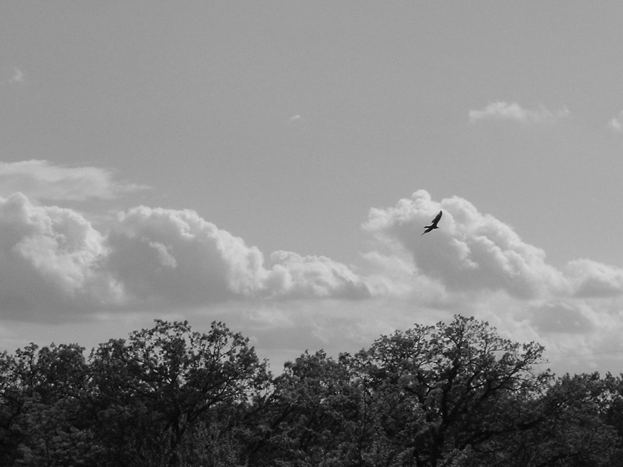Bird in the sky by sSTARRMa