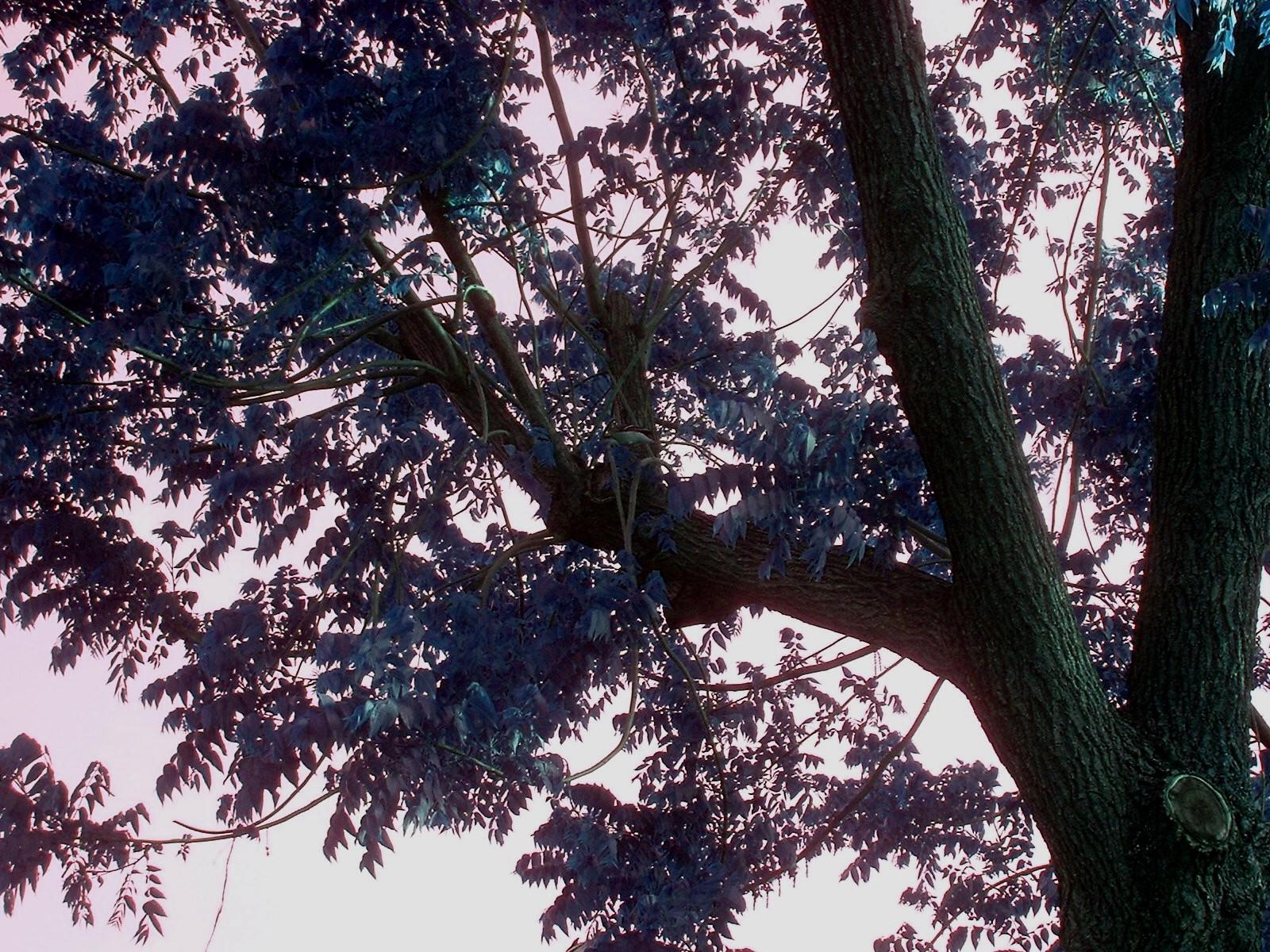 Tree2 by sSTARRMa