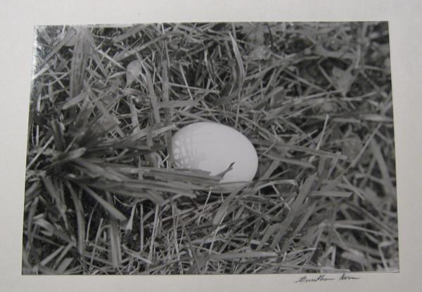 Egg in grass by sSTARRMa