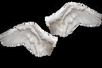 Swan 2 Wings