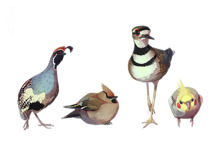 Fat Birds by CoyoteMange
