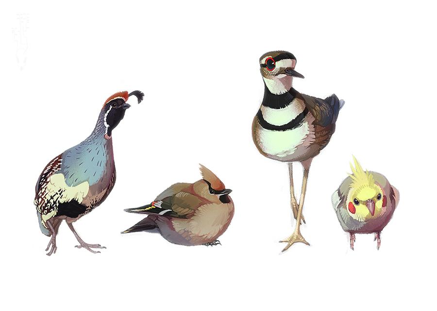 Fat Birds by CoyoteMange