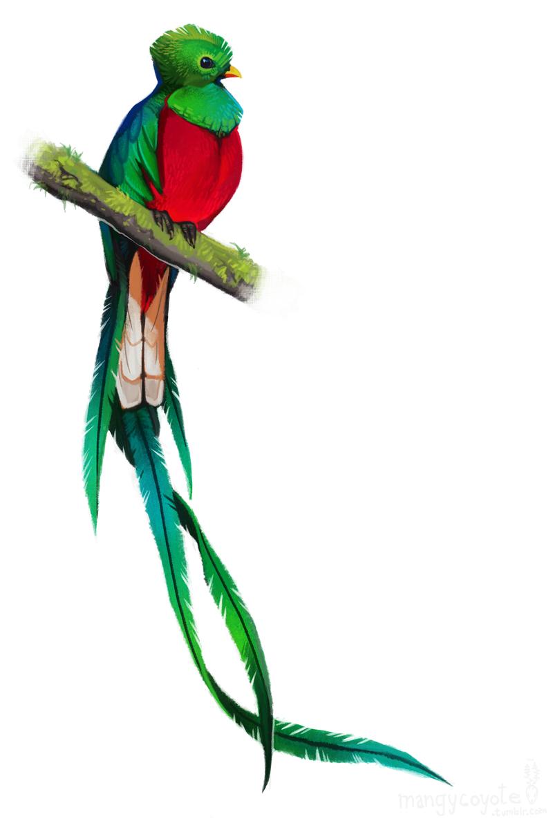 Resplendent Quetzal by CoyoteMange
