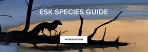 New esk species guide! by witherlings