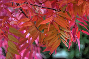 FREE Orange Leaf Stock