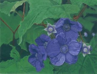 Wild Flower(Niagara Gorge) 001 by GuitarWars