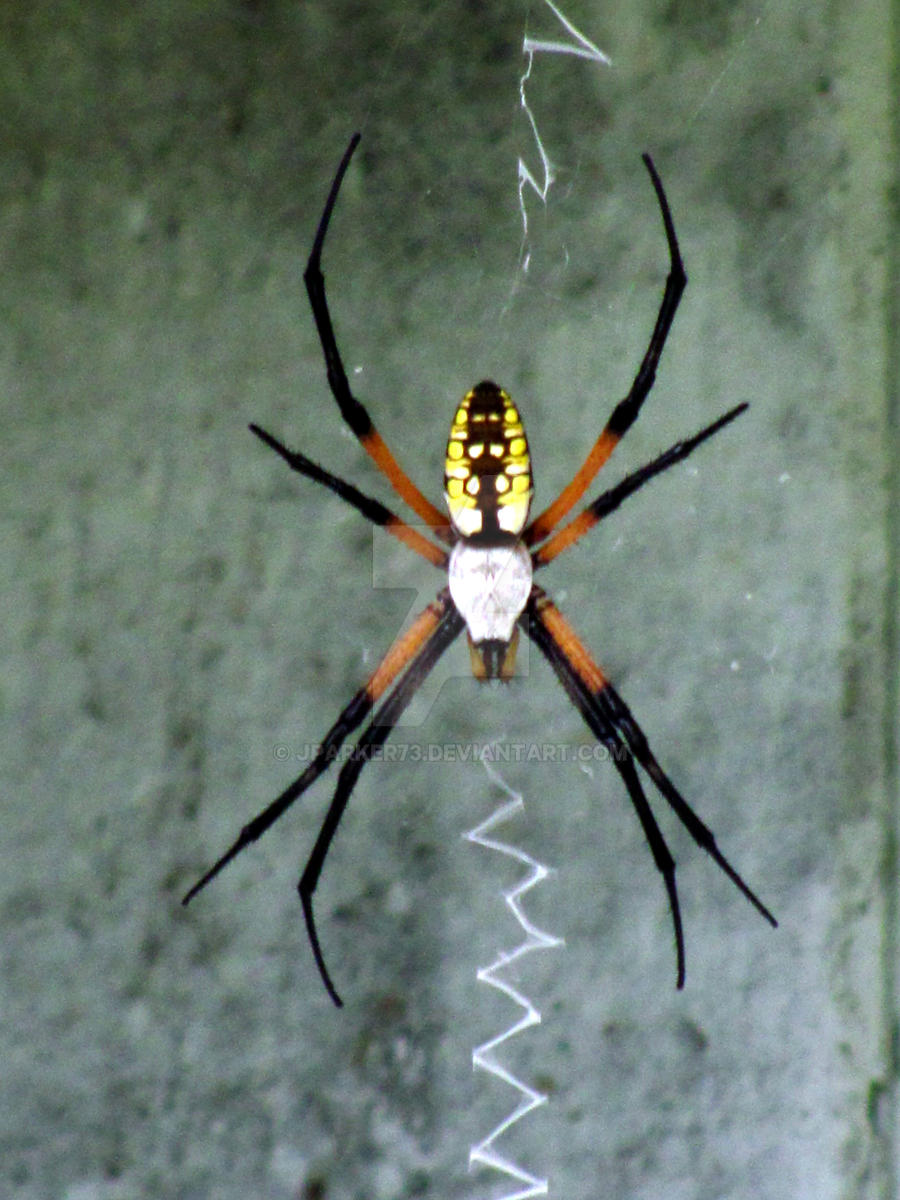 spider writing Argiope aurantia is found in the neartic region of the world one of eight ecozones, the neartic consists of the terrestrial ecoregions of north america.