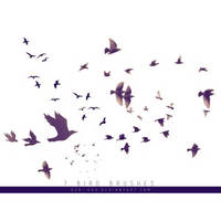 7 Birds Brushes free Download by SaydiAbbas