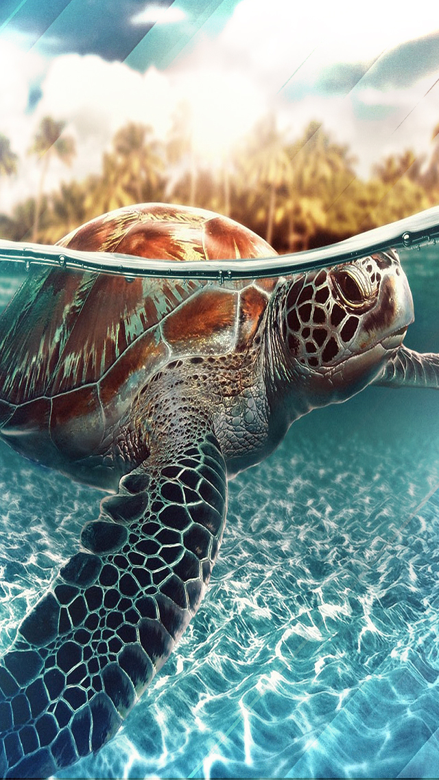 Requested Turtle Wallpaper By Stealthy4u