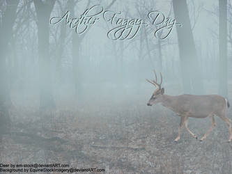 Another Foggy Day