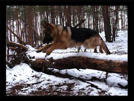 My German Shepherd by Hypnotize69