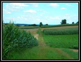 Corn Fields by dignitarium