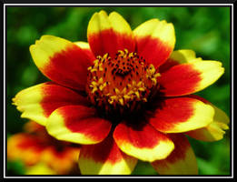Sunny Flower by dignitarium