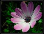 Purple Daisy 2 by dignitarium