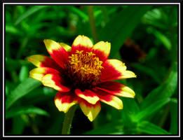 Sunny Flower 2 by dignitarium