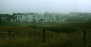 Oh That Fog