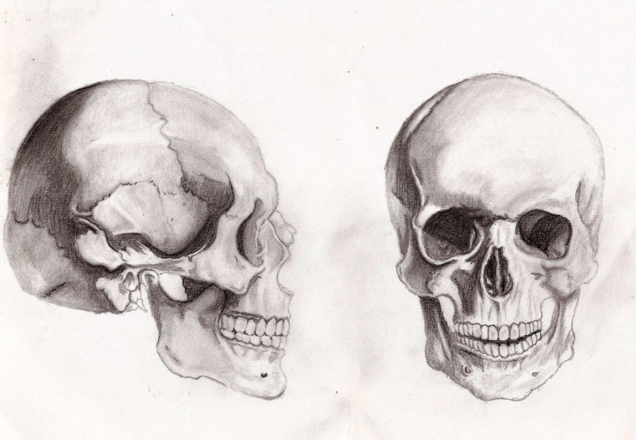 Group of Artistic Anatomy Skull Wallpapers