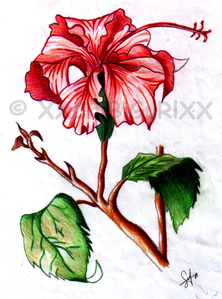 Image Result For Hibiscus Flower Coloring