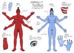 Anatomy of LG Roshava by The-Greys
