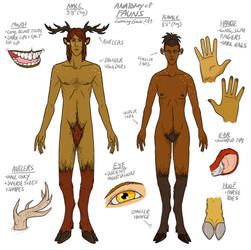 Anatomy of LG Fauns by The-Greys