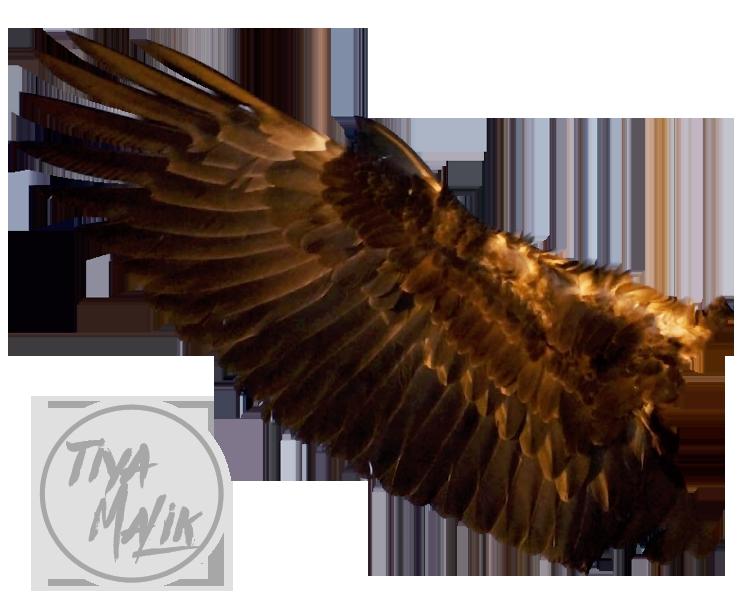 Adlerflügel
