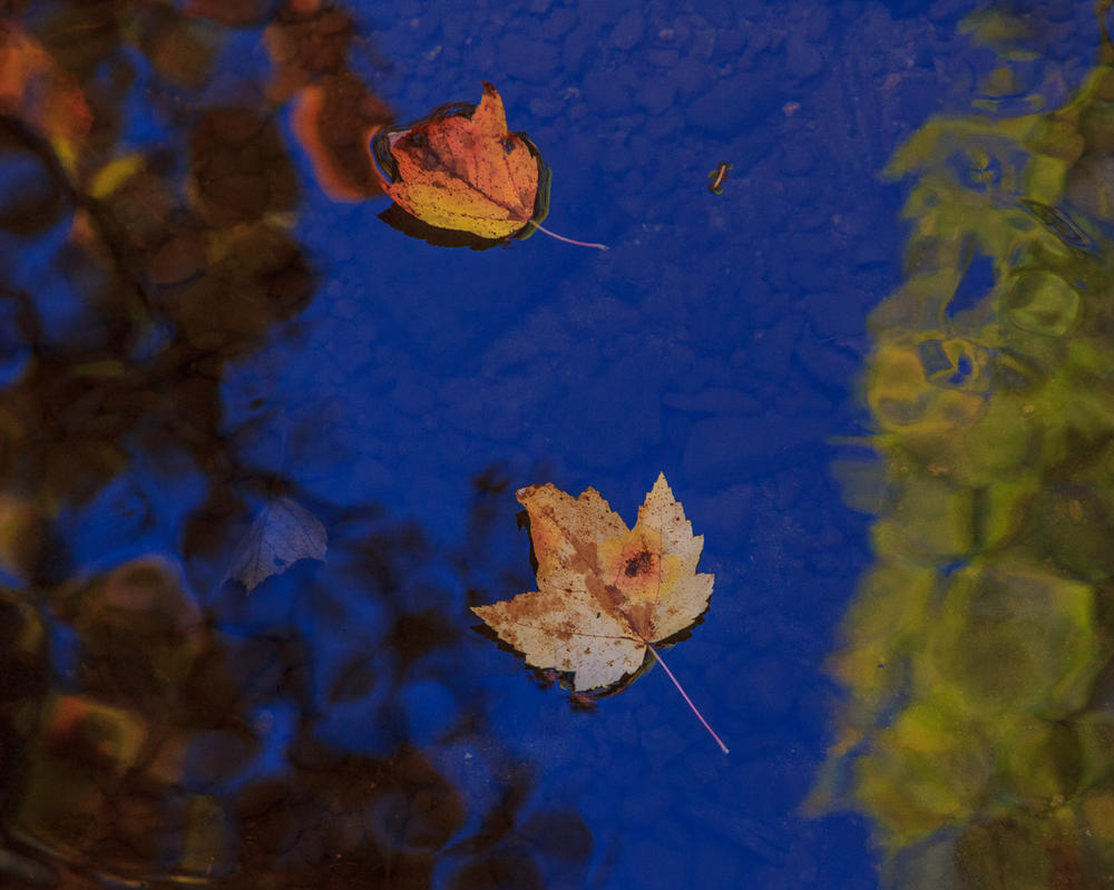 Floating Leaves by aaron5153