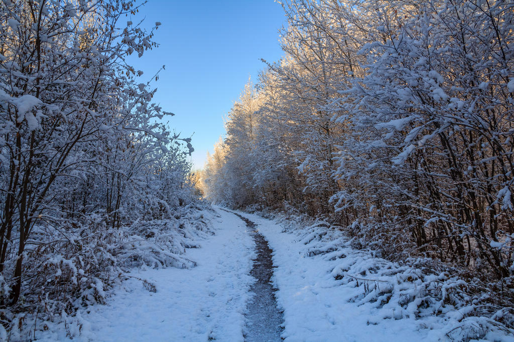 Winter Path 1 by aaron5153