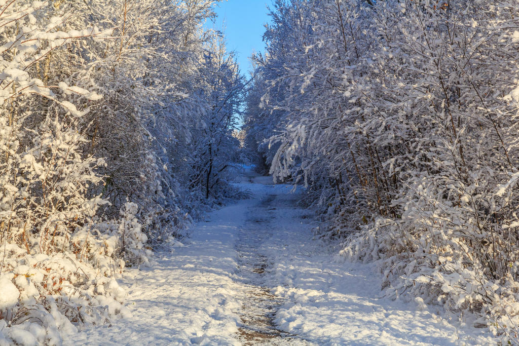 Winter Path 2 by aaron5153