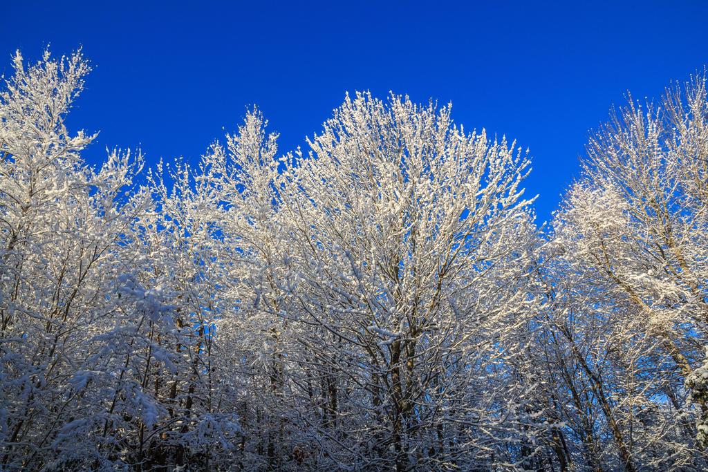 Frozen Trees 2 by aaron5153