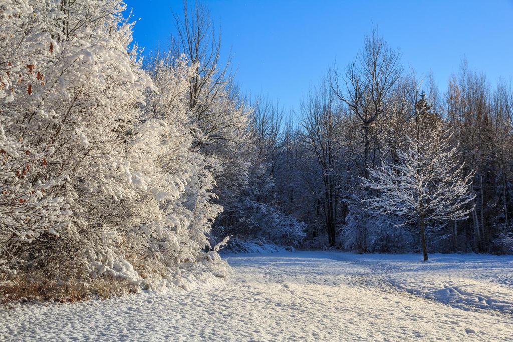 Frozen Trees 3 by aaron5153