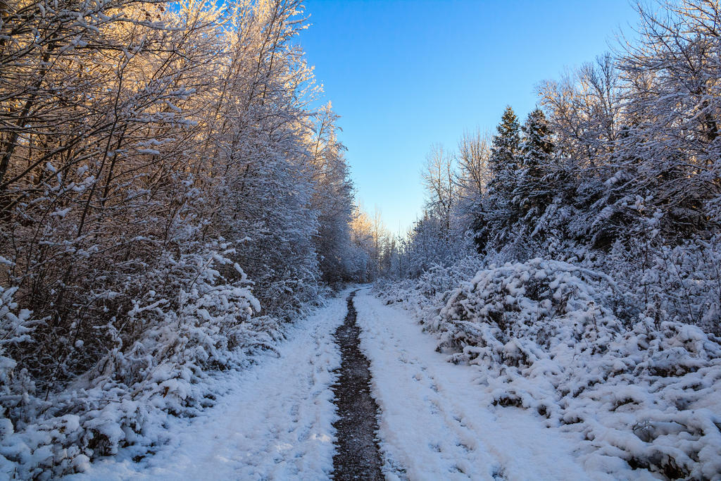 Winter Path 3 by aaron5153